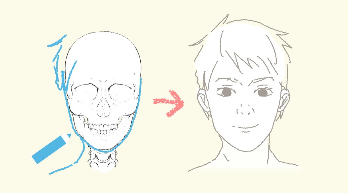骨格にそって顔を描こう